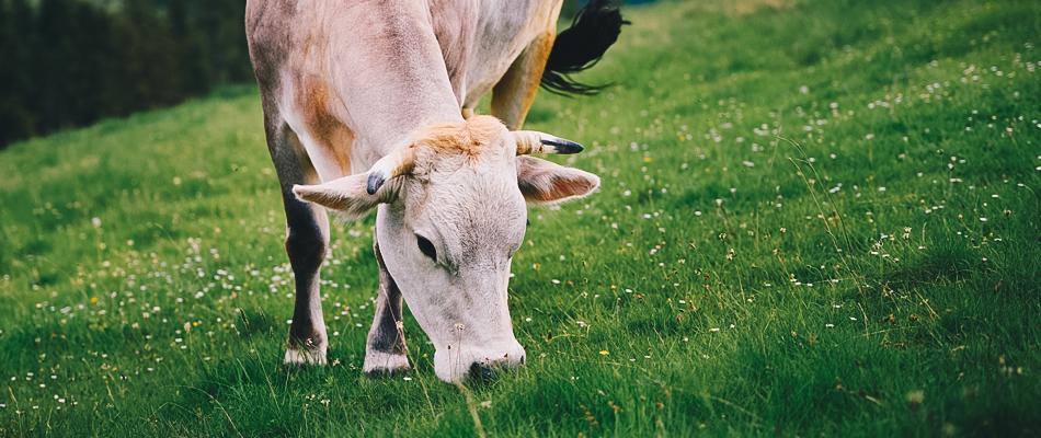 Carne de Pasto Valles del Esla
